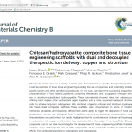 Report on chitosan-hydroxyapatite composite bone tissue engineering scaffolds